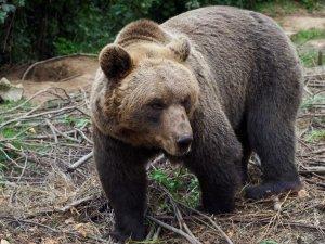Túrázás Senjből, medve a Kuterevo Medveparkban