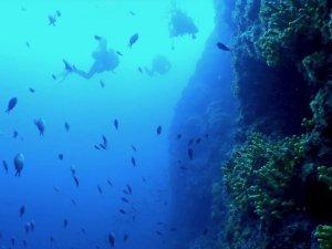 Mogya kúp merülőhelyen búvárok úsznak a fal mellett