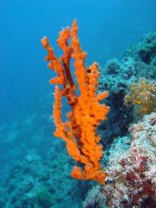 Samonjin merülőhelyen narancssárga szivacs