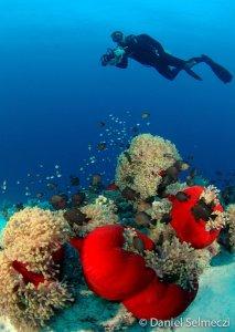 vörös-tengeri buvarszafari